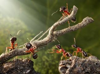Fiziologija i zivot mrava