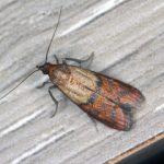 Fiziologija i zivot moljaca