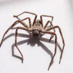 Fiziologija i zivot paukova