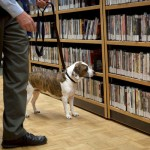 Prisustvo stenicama na velikom prostoru se dokazuje nameskim i posebno obucenim psima tragacima dresiranih na miris stenica.Tacnost ove metode detekcije koriscenjem pasa tragace je 100%.