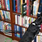 Psi tragaci posebno obuceni na prisustvo mirisa stenica vec nakon par sekundi osete i nanjuse stenice cime se stedi na vremenu ljudskih resursa u detaljnom vizuelnom pregledu.Zarazene knjige sa stenicama se izdvajaju i tretiraju skupim hemijskim reagensima iskljucivo za dela antikvitetske vrednosti ne ostecujuci ih.