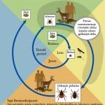 Ciklus zivota i razmozavanja krpelja u prirodi tokom svih cetiri godisnjih doba.Klik na sliku levim misem gore za prikaz fotografije sa svim detaljima.