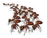 Zivot mrava opis Dezinsekcija.net