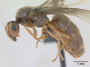 Matica zutih mrava snimljena uvelicanim mikroskopom nekoliko stotina puta.