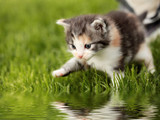 Boravak macaka na livadama i travnjacima je najcesci vid unosa krpelja u objekat ukucana koji cuvaju i brinu se o psima i mackama.