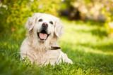 Pas se prema preporuci drzavnih medicinskih ustanova mora detaljno pregledati nakon svakog boravka u prirodi i na zelenim povrsinama na pojavu krpelja u kozi ispod dlake psa.