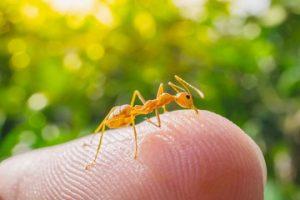 zuti mravi sitni u kuhinji dezinsekcija i deratizacija grad Beograd i grad Novi Sad.
