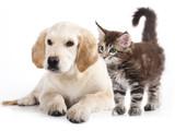 Psi i macke su prve na udaru krpelja i bakterije BORELIE u prolecnim mesecima nakon setnji na travnatim povrsinama.
