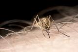 Dezinsekcija na pojavu komaraca u svim Beogradskim opstinama za 17.jun 2013-e godine.