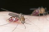 Dezinsekcija na pojavu komaraca.