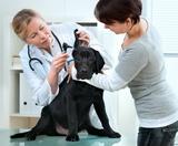 Dijagnostika i kompletno izlecenje pasa i macaka se mora obavljati u koordinaciji sa veterinarskom sluzbom i obezbedjivanjem pasa i macaka od skokova i kacenja insekata na kozi.Nakon toga se primenjuje strucni dezinsekcioni tremtan celog zivotnog ili radnog objekta.