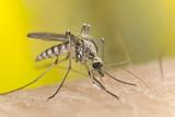 Pretnja komarcima.Svaki ukucanin i vlasnik objekata zahvacenim nakon poplava se moze brzo-jednostavno-i jeftino zastititi od svih vrsta bolesti i ujeda komaraca sa samo jednim 100% efektivnim sastojkom i ujedno spasiti zivot sebi i ostalim osobama na odrzavanju cistoce objekata nakon poplava.