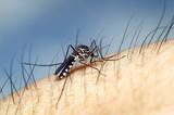 Zaprasivanje komaraca utice na ponasanje i zivotni vek pcela-osa-strsljenova.Mole se vlasnici pcelinjaka da preduzmu sve mere zastita svojih pcela.Tokom aktivnosti zaprasivanja komaraca iz vazduha primetna je izrazita aktivnost i agresivnost osa i strsljenova.