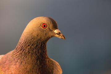 Kako odbiti golubove sa terasa i tavana.