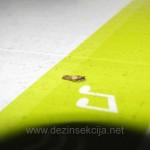 Deratizacija Beograd,Deratizacija Novi Sad,Deratizacija moljci cene Beograd,Moljci u tepihu,Moljci u garderobi,Moljci u ormanima,Preparati za moljce,Sluzba moljce,