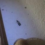 Deratizacija moljci Beograd,Deratizacija Beograd cene,Kako unistiti moljce,