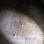 Deratizacija moljci Beograd,Deratizacija moljci Beograd cene,Deratizacija moljci Novi Sad,Kako unistiti moljce,Moljci u tepihu,Moljci u ormanima,
