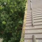 Na autenticnim fotografijama naseg alpinistickog tima se vidi nivo destrukcije golubova za bilo koji urbani objekat.U ovom slucaju od nastanjenog izmeta doslo je do takoreci zapisivanja oluka i protoka vode prilikom kisnih dana.Sav prikazani izmet golubova je bio prepun golubovih buva koje su sa oluka pristilaze uposljenicima Instituta na poslednjem spratu putem otvorenih prozora za vreme toplih letnjih meseci.Sa nase strane kompletan izmet je ociscen i postavljen lagani pocinkovano-talasasti lim.Klik na sliku za prikaz svih detalja.