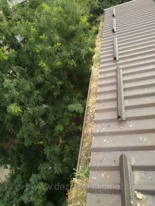 Na autenticnim fotografijama naseg alpinistickog tima se vidi nivo destrukcije golubova za bilo koji urbani objekat.U ovom slucaju od nastanjenog izmeta doslo je do takoreci zapisivanja oluka i protoka vode prilikom kisnih dana.Sav prikazani izmet golubova je bio prepun golubovih buva koje su sa oluka pristilaze uposljenicima Instituta na poslednjem spratu putem otvorenih prozora za vreme toplih letnjih meseci.Sa nase strane kompletan izmet je ociscen i postavljen lagani pocinkovano-talasasti lim.