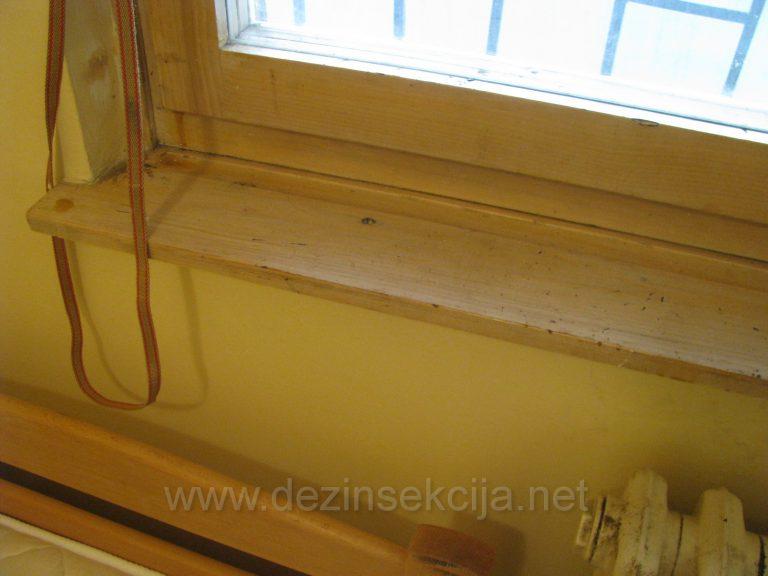 Stenice vole deo stokova ramova vrata i prozora.Spolja se nista ne vidi.Pregledom namenskih led lampica i ubrizgavanjem preparata pocinju da izlaze iz svojih skrovista.