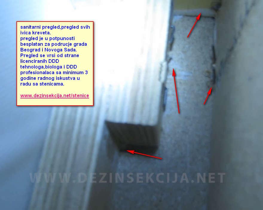 Prikaz izvrsenja sanitarnog pregleda nasih DDD tehnologa i biologa.Prvo pravilo 100% regulacije krevetnih stenica ne samo u Beogradu ili Novom Sadu vec u bilo kom gradu Srbije,Evrope ili sveta je sanitarni pregled obrazovanih lica koja imaju iskustvo u radu sa stenicama.Sluzba koja drzi do svog znanja,renomea i referenci,postenja i odgovornosti ce uvek prvo doci da uradi besplatan sanitarni pregled pre bilo kakvog tretmana kako bi 100% bili sigurni u ishod tretmana i postavili sve dalje parametre rada.Lakoverni Klijenti u Beogradu i Srbiji su misljenja da ljudi koji unistavaju bubasvabe ili mrave mogu raditi i stenice te ih pozivaju ne traze besplatan sanitarni pregled,ljudi dodju,isprskaju za 5 minuta kako isprskaju uzmu 1,2,3 ili 5 hiljada a rezultata nema.Svest o stenicama na prostorima Srbije i bivsim YU republikama je jedna od najnizih od svih drzava Evrope.Zbog toga stenice opstaju u zivotu i nastavljaju sa infiricarnjem putem torbi ne samo inicijalni stan Klijenata vec i stanove i kuce rodjaka,prijatelja,komsija i kolega koji dolaze u inficiranom stanu a vlasnici i stanari odnosno podstanari toga nisu svesni.Nakon 5-6 meseci bezuspesne borbe nas pozivaju i objasnjavaju nacine na koji su prevareni jer jednostavno veruju svakome i misle da se znanje o stenicama nalazi za 1000 ili 2000 dinara/15 eura za nivo 2-sobobnog ili 3-sobnog stana.Izuzetno niska svest o stenicama je i ogroman razlog zasto pravi i edukovani licenciraniDDD tehnolozi odlaze iz Srbije i ne zele da rade bilo sta vise Klijentima u Srbiji.