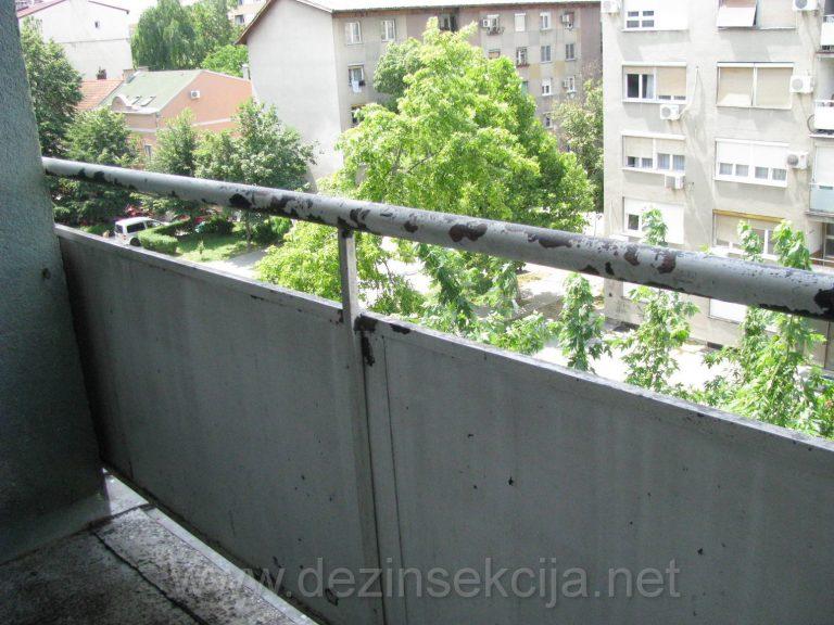Zardinjere i unutrasnji zidovi terasa su prvi na udaru golubova.Pristupamo visefaznom ciscenju navedenih povrsina sa proverenim reaktivnim preparatima bez fizickog narusavanja izgleda ili ostecenja terasa.