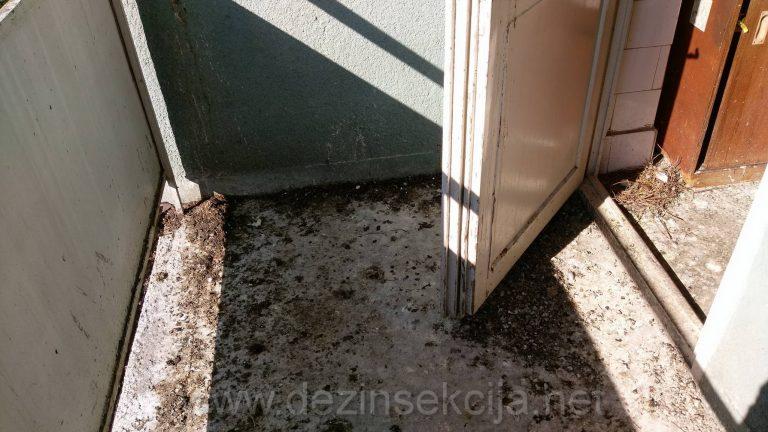 """DEstruktivnost golubova""""Letecih pacova"""" na primeru uneredjene terase jednog stana u Novom Sadu."""