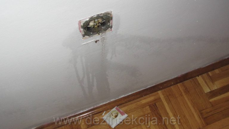 Na fotografiji nase tehnicke slzube stan u Beogradskom naselju Zarkovo i uticnice zahvacene bubarusima prethodnih neurednih stanara,