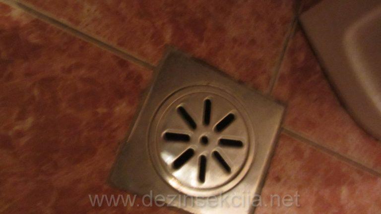 Kanalizacioni odvodi su prvi ulaz bubarusa u stanu tokom noci kada ukucani spavaju.