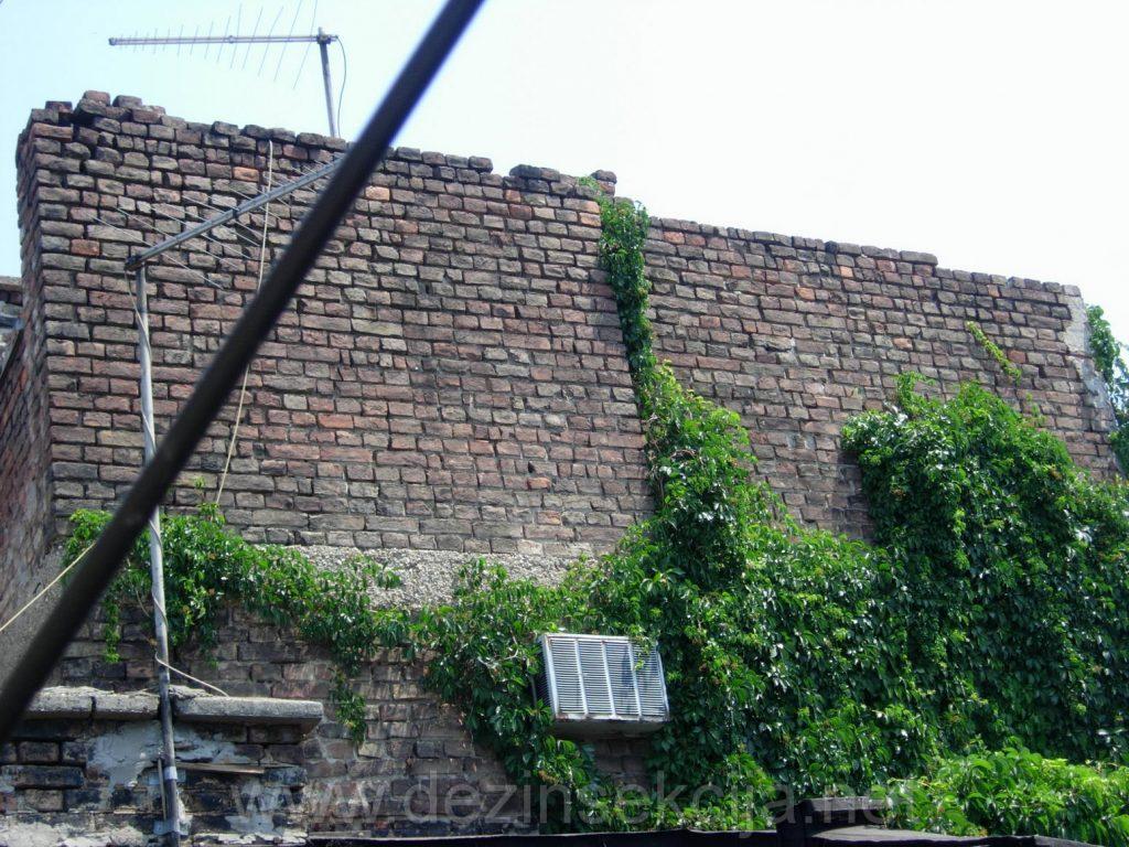 Omiljeno steciste bubasvaba u Beogradu i Novom Sadu su dotrajale i stare zgrade sa puno pukotina i bez fasade.U svim tim pukotinama je leglo bubasvaba koje se ne vidi u toku dana ali u toku noci ulaze u okolne stanove stanara i podstanara.