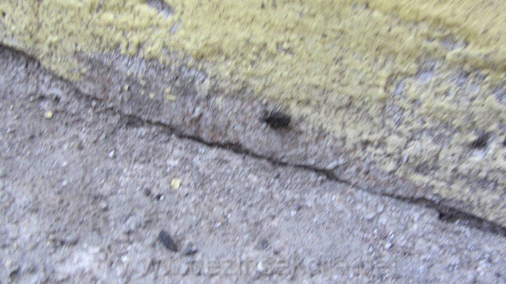 Kolonije bubasvaba u raspalom asfaltu u toku leta.