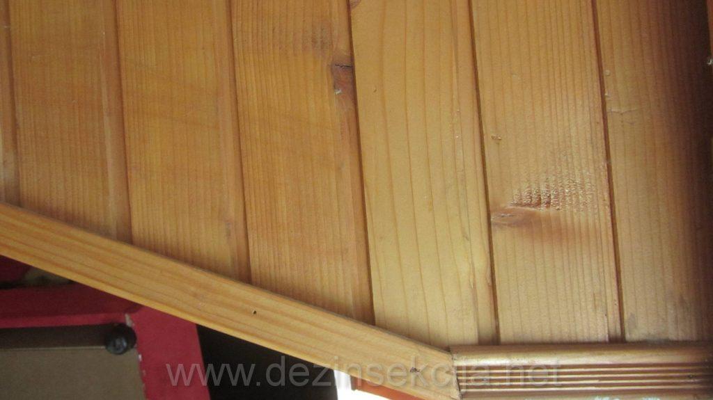 Lamperija u zidu je omiljeno steciste svih bubarusa i bubasvaba.Problem je resiv iskljucivo pastama-gelovima ili postavkom eko-granulica.Koristimo kombinaciju najnovijih eko pasti i eko gelova koje bubasvabe jedu i time regulisemo kolonije ovih insekata u prvih par dana po postavci sa pismenom 6-mesecnom garancijom na ucinkom i ostavkom besplatne sume preparata u slucaju bilo kakvih recidiva.
