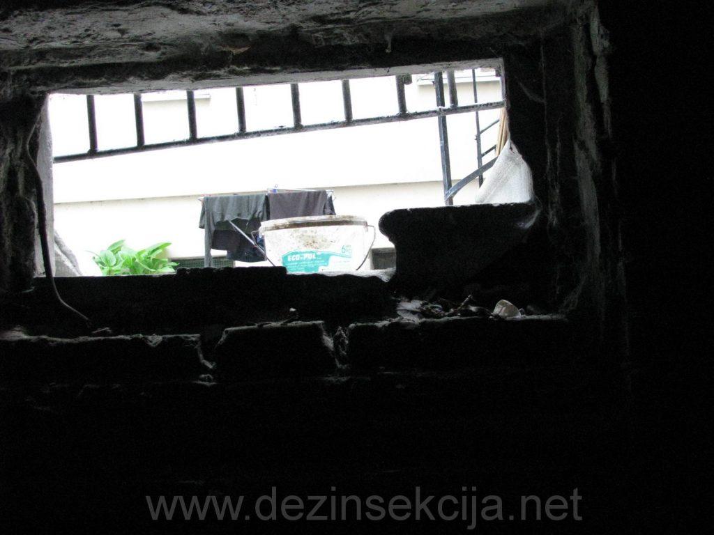 Napusteni i nezasticeni podrumi zgrada su prvi na udaru macijih buva i macaka koje tu pronalaze svoje skroviste.Po tretmanu svi prozori podruma se moraju zatvoriti kako macke ne bi vise unosile buve.