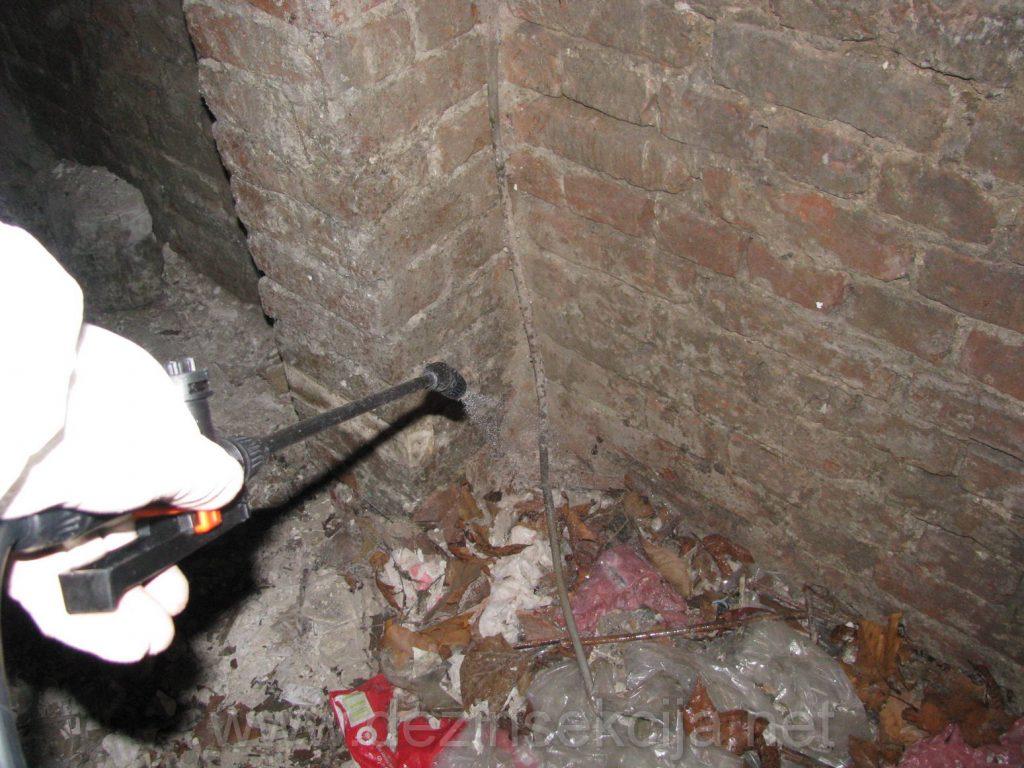 Ogromna kolicina nepotrebnih stvari u podrumima je zahvacena buvama od macaka koje su ulazile kroz otvorene prozore podruma.