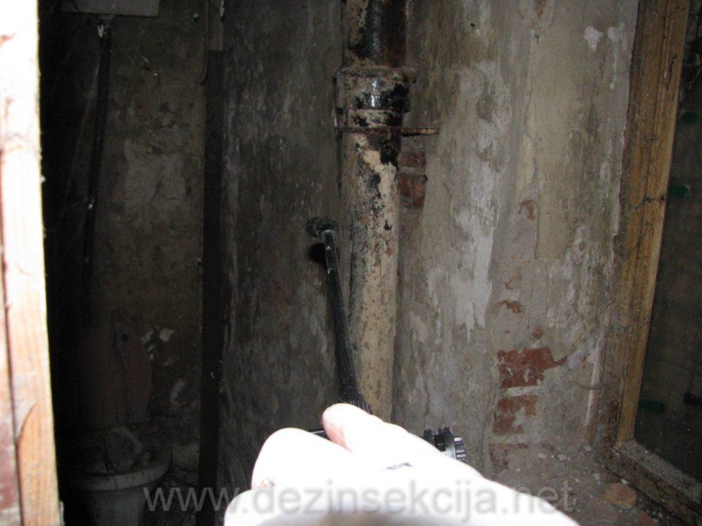 Vlazni podrumi puni vlage i vode iz dotrajalih cevi i kanalizacije su steciste buva tokom proleca i leta.