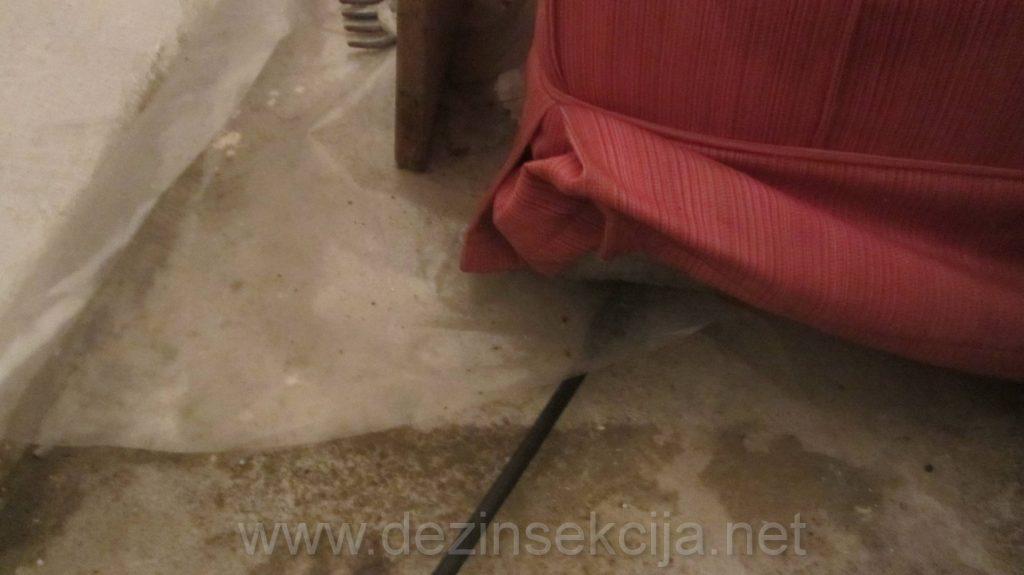Dosta stvari u podrumima zgrada su steciste buva od macaka koje udju kroz otvorene prozore i tu zapate buve.Stoga se dezinsekciji buva u podrumima mora pristupiti krajnje ozbiljno i do detalja kako bi sam tretman bio uspesan iz prvog puta.