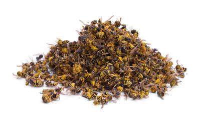 Alarm: Pomor pčela u Pomoravlju zbog ljudskog nemara