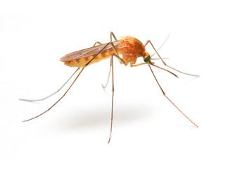 Nakon velikih prituzbi gradjana i medijskih objava nadlezne ustanove u Republici Srbiji su krenule u ozbiljniju regulaciju pojave komaraca ne samo u Vojvodini i Novom Sadu i Beogradu vec i u ostalim mestima u Srbiji.Saopstenja nadleznih ustanova nam to upravo i potrvdjuju zvanicnim dojavama.PRoblem zaprasivanje komaraca sa sobom nosi veliki rizik po smrtnost pcela koje su senzitivne na preparate na pojavu komaraca.Pcelirama se savetuje da barem 1-2 dana po izvrsenom tretmanu ne pustaju pcele vani kako se nebi kontaminirali od nastalog preparata na pojavu komaraca i citavih 24 sata po tretmanu.