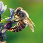 Bogati oskarovac i poznati glumac Morgan Frimen svoj ranč pretvorio u raj za pčele da bi ih spasao od uginuca