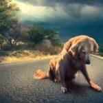 Masovno trovanje pasa u Prokuplju, treće za mesec dana