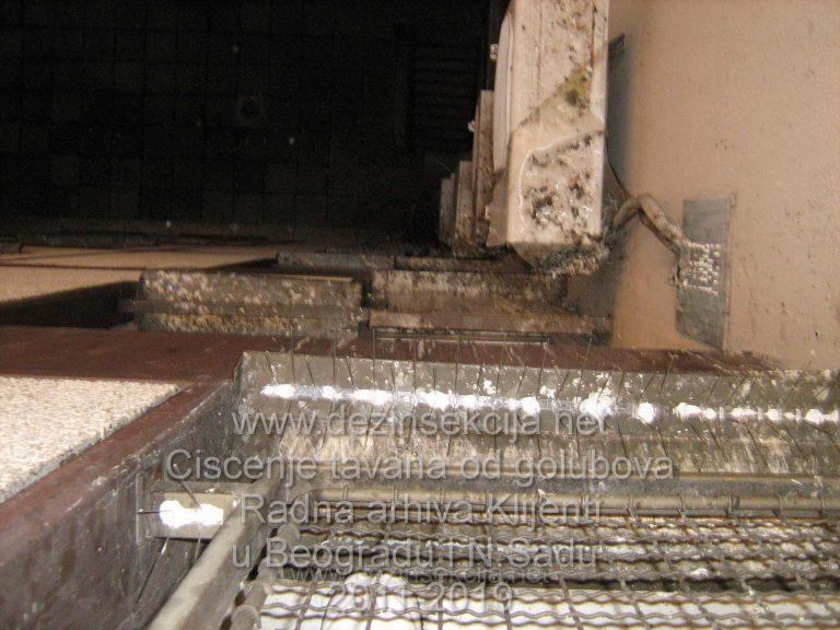 Postavka sertifikovanih iglica u trajnom odbijanju golubova prikaz rada,Klijent fizicko lice Gandijeva 202,Novi Beograd.