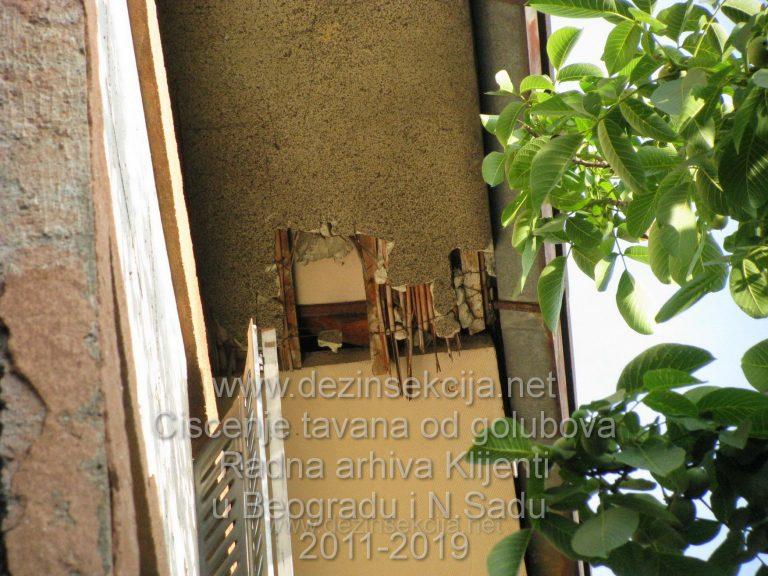 Gde ulaze golubovi u napustenim i neodrzavanim zgradama mozete videti ovde.