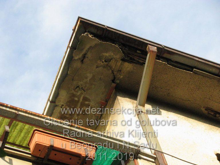 Izostanak restauracije i renoviranja krova rezultuje vrlo brzo nastanjivanjem golubova a sa njima i bubasvaba.Beograd,Karaburma 2016.