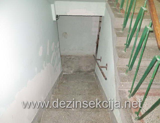 Regulacija mačijih buva u neobezbedjenim podrumima zgrada u Zemunu.Klijent korisnik usluga Stambena jedinica u ulici Alaska 22 u Zemunu.Uspešno izvršena dezinsekcija celokupnog inficiranog podruma od buva i hodnika zgrade kao i dvorišta.Nezatvarani prozori na podrumima su savršeno stecište za divlje mačke koje tu obitavaju i inficiraju ceo podrum.Nakon ulaska stanara u podrume pokupe buve na nogavica,obući i čarapama i unose u kući.Veliki broj buva od mačaka se unese i putem kućnih ljubimaca koje stanari izvode u šetnji u kontaminiranom dvorištu gde nije radjena mera dezinsekcije i dezinfekcije na pojavu rezistentnih mačijih i psećih buva.Nakon kompletne dezinsekcije podruma zgrade sa naše strane preduzete su mere kompletne edukacije Skupštine Stanara zgrade i vlasnika kućnih ljubimaca u 100% profilaksi i preventivi i zaštiti od uličnih mačaka koji su 99% slučajeva vektori i prenosioci buva u podrumima a kasnije i u stanovima na način opisan gore.Datum uspostavljanja poslovno tehničke saradnje april 2019 e godine.