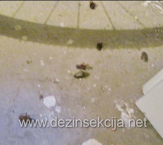 Sve bubašvabe su uginute i nadalje preparat obezbedjuje višemesečnu zaštitu nakon aplikacije.,
