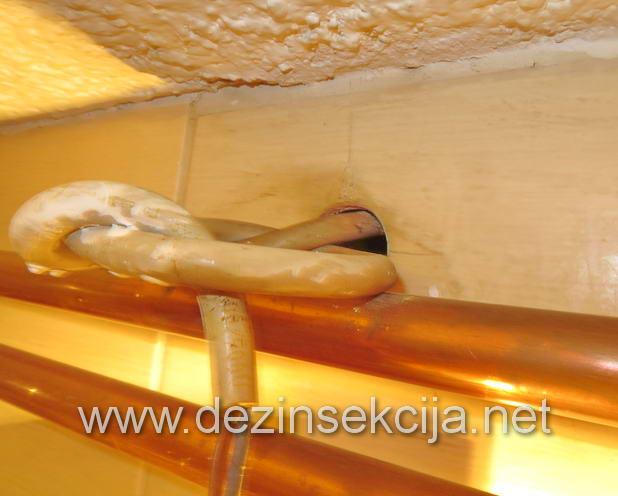 Rupe u zidovima od dotrajalih pločica odakle su bubašvabe izlazile.