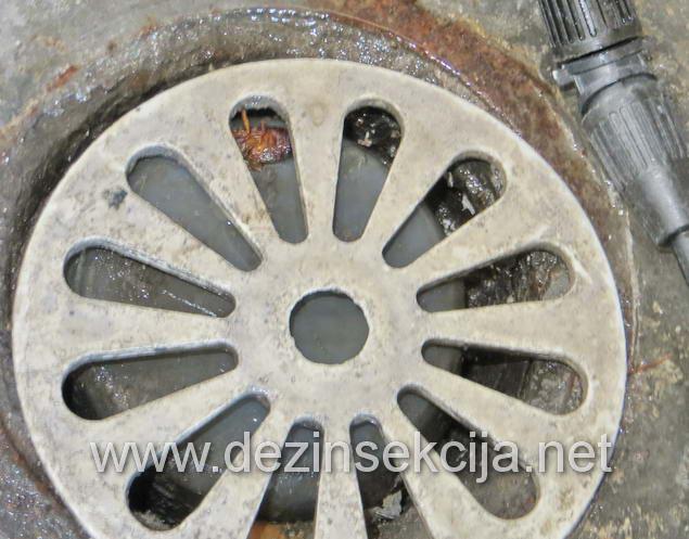 Prikaz gde bubašvabe najčešće izlaze.Neobezbedjeni slivnici i kanalizacioni otvori.Pored prskanja preporuka je postavka metalne ili pvc mrežice preko.