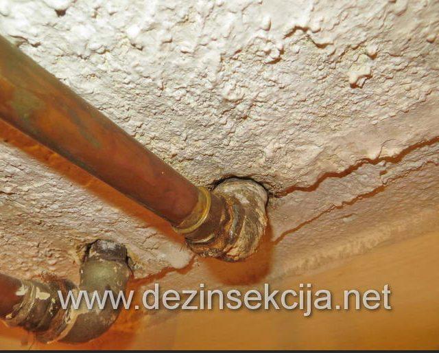 Preventiva i dalji saveti u odbijanju bubašvaba.Sve rupe u kupatilu bi trebalo dobro zatvoriti silikonom odnosno silikonizirati.