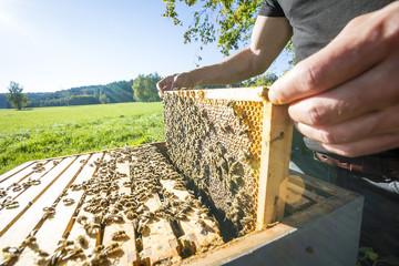 Srbija suportno svim direktivma EU i milionskim donacijama belezi sve manji kvalitet meda ali i sve manji broj kvalitetnih i iskusnih pcelara.Ogroman broj slucajeva masovnog trovanja pcela ostaje neistrazen i nesankcionisan.