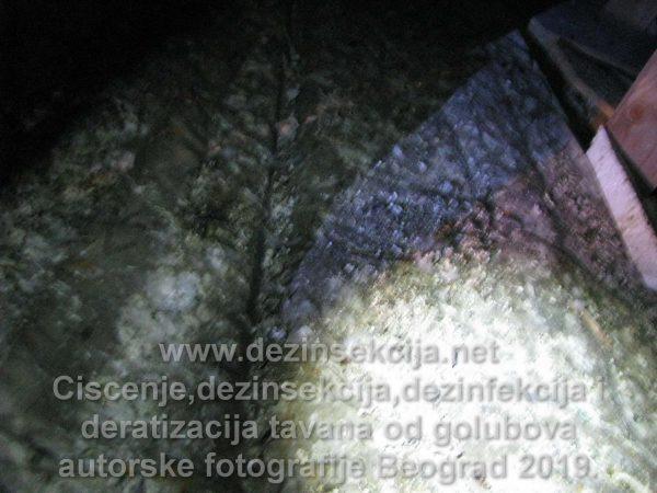 Postupak čišćenja tavana i terasa od golubova.Grad Beograd.Vračar.2017 e godine.